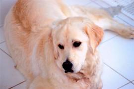 Hunde sind in Mietwohnungen oft unerwünscht