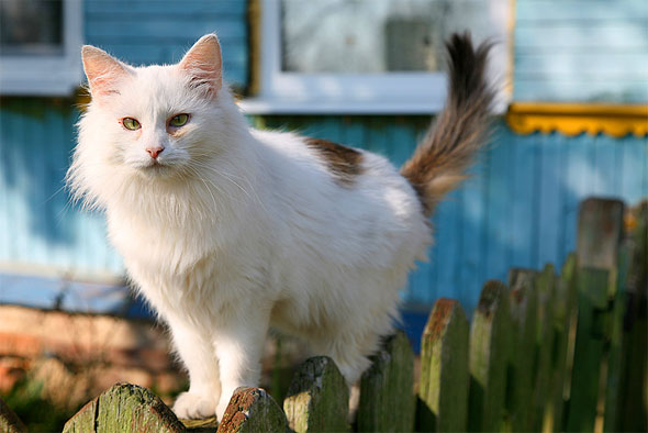 A Plant Feral Cats Eat