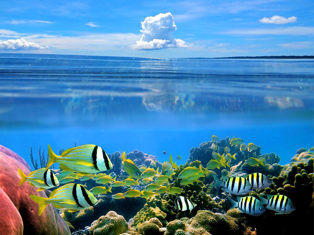 Wasserwelt in Costa Rica (Foto: vilainecrevette   iStockphoto   Thinkstock)
