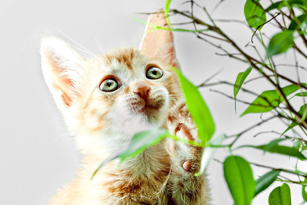 Katze spielt mit zimmerpflanze 109 von 289 - Zimmerpflanze rankend ...