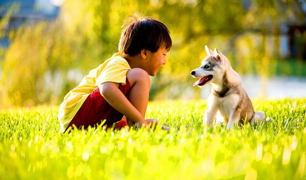 durch hunde leben menschen gesünder