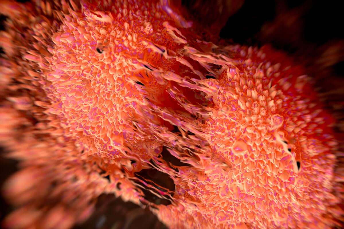 Prostatakrebs-Zellen teilen sich