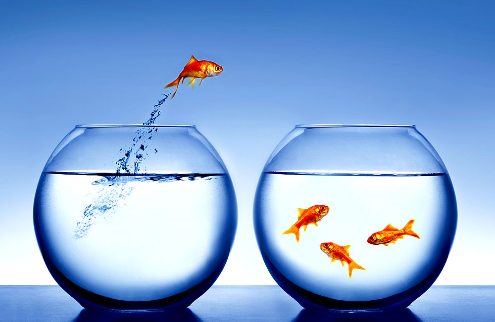 china wissenschaftler machen goldfisch unsichtbar. Black Bedroom Furniture Sets. Home Design Ideas